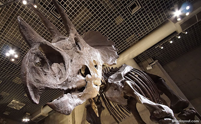 Dinosaur Collection at the Museum