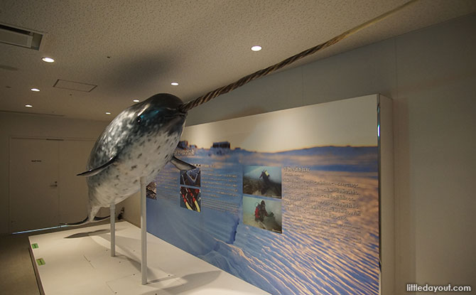 Model of a narwhal