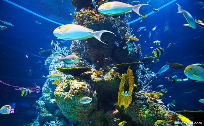 Safety Measures at S.E.A. Aquarium