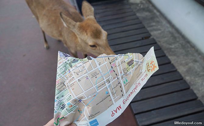 The deer ate our map.