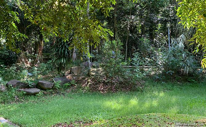 Hillside Arboretum