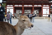 A Day Trip To Nara, Japan: Deer, Sights And Mochi