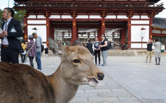 A Day Trip To Nara, Japan: Deer, Sights And Mochi