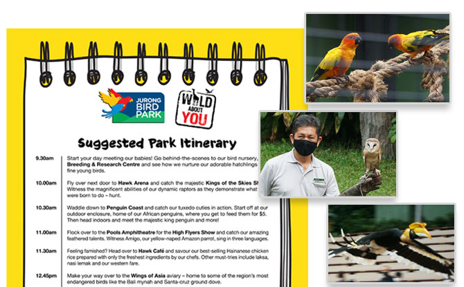 Jurong Bird Park itinerary - How to spend a day at Jurong Bird Park