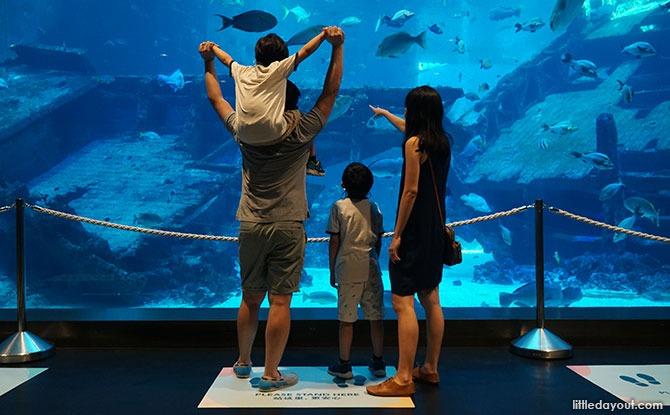 S.E.A. Aquarium Floor Markers - Safe Management Measures