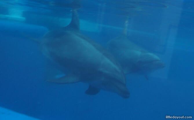 Kyoto Aquarium's dolphins