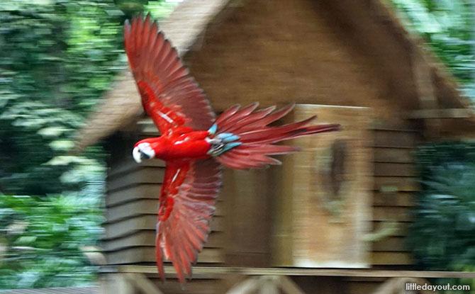 Grab Wild Deals at Jurong Bird Park