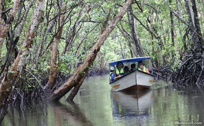 Mangrove Tour, The Bintan Residence
