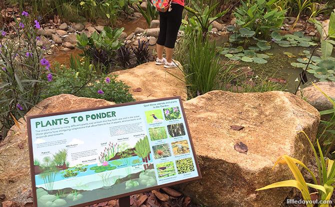 Stream Plants at Jacob Ballas Children's Garden New Extension