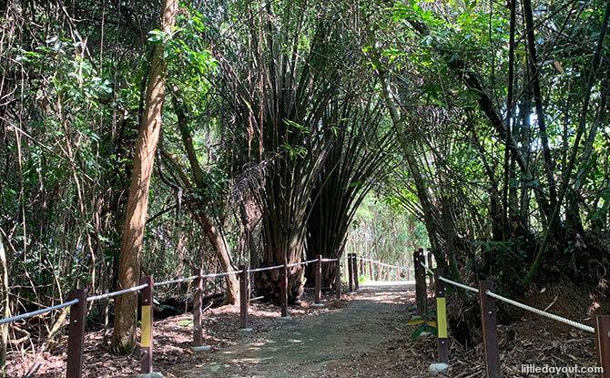 Trails at Thomson Nature Park Singapore