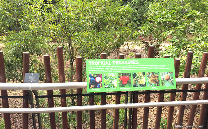Fruit Orchard at Orchard Zone at Jacob Ballas Children's Garden New Extension