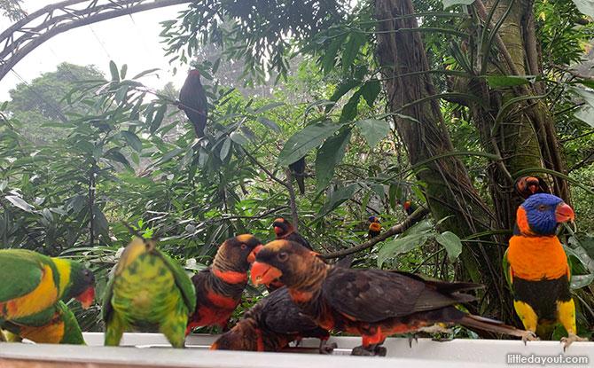 Lory Loft, Jurong Bird Park