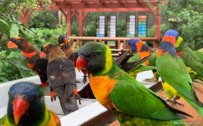 Lory Loft at Jurong Bird Park