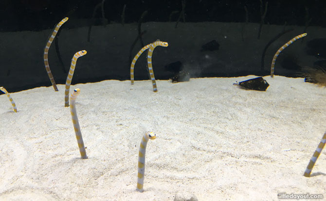 Eels at the Kyoto Aquarium