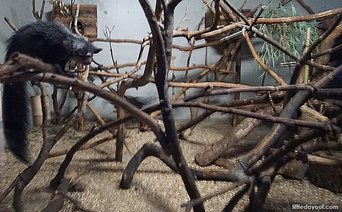 Aye-aye Forest, Ueno Zoo in Ueno Park, Tokyo