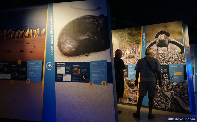 Visiting the Antarctica exhibition at the Noobies Centre.