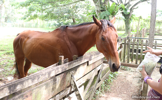 Animal Resort-Horse