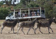 A Safari Adventure at Werribee Open Rang Zoo in Melbourne