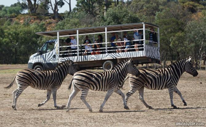 41-werribee-open-range-zoo-melbourne