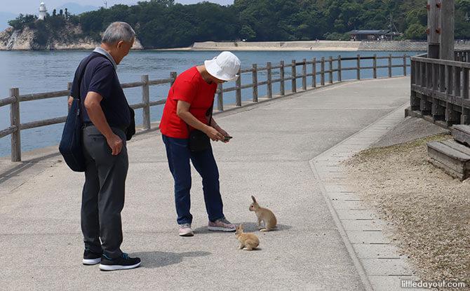 Visiting Okunoshima Bunny Island
