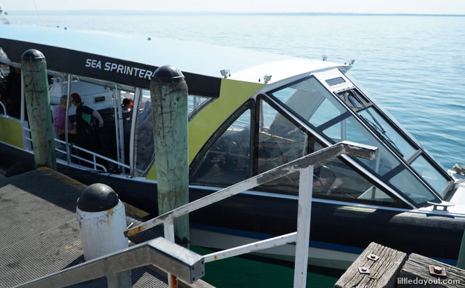 Sea Sprinter, the boat which brought us out to Seal Rocks.