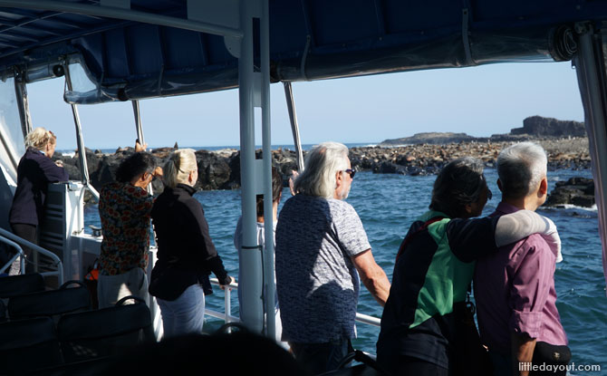 Viewing the seals on the Phillip Island eco-boat tour.