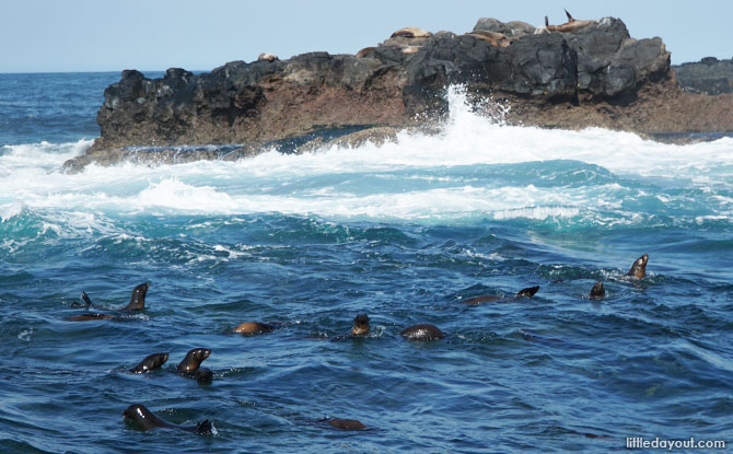 Seal Rocks, home to the largest colony of Australian Fur Seals.
