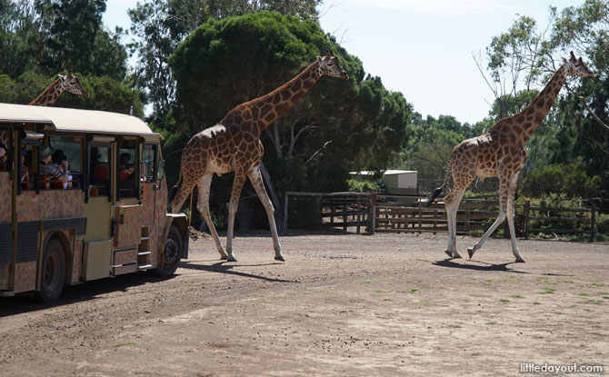 Safari bus at the Werribee Open Range Zoo.