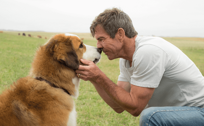 A Dog's Purpose movie still