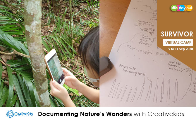 September Holiday Virtual Camps 2020: CreativeKids - Documenting Nature's Wonders
