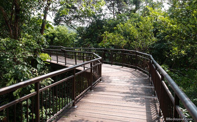 Canopy Walk at Kent Ridge Park