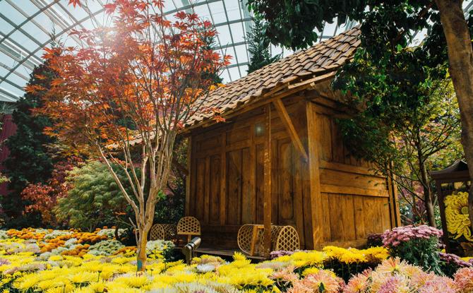 Chrysanthemums-floral-display-4-670x415