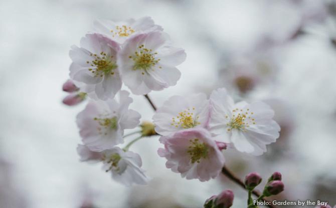 Blossom Bliss