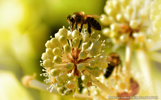 Generic bee insect