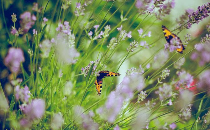 Generic butterfly