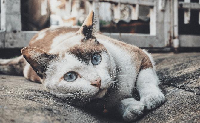 Singapore Cat Festival 2018
