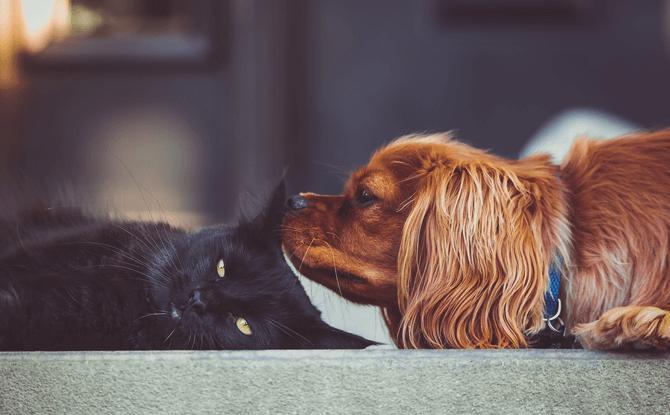 Generic dog cat