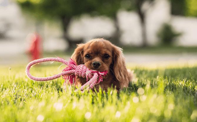 Generic dog park