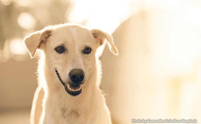 Generic dog sunshine 4