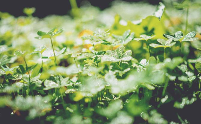 Generic green plants