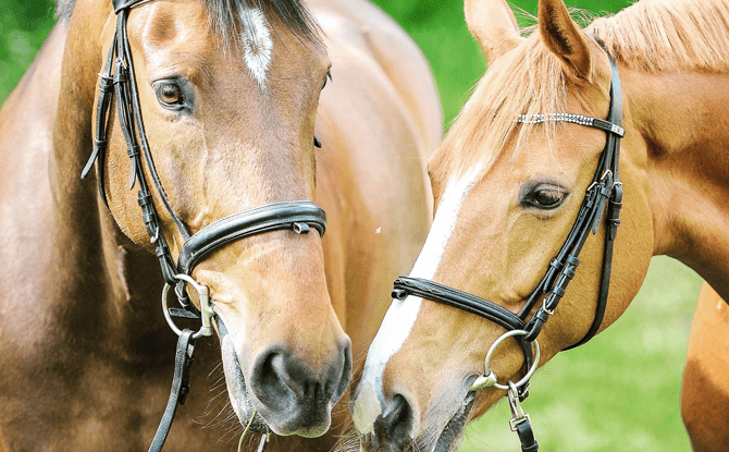 Generic horses