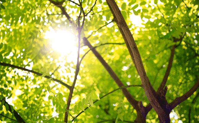 Generic tree sunlight