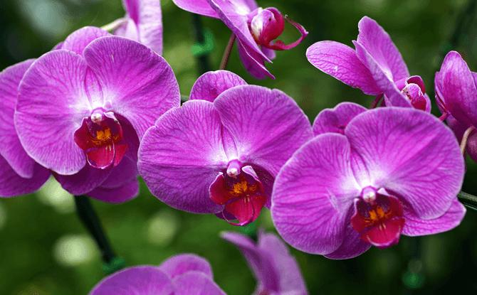 Generic Orchid