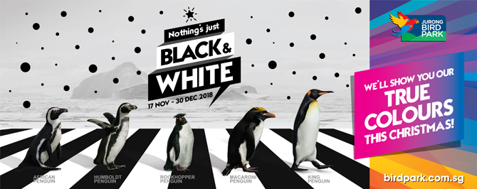 Jurong Bird Park: Nothing's Just Black & White