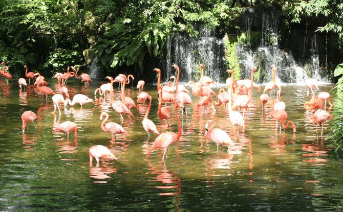Jurong-Bird-Park-03