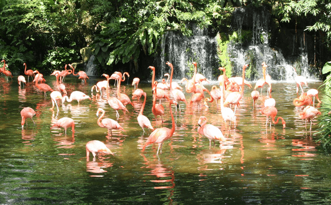 Jurong Bird Park Timings