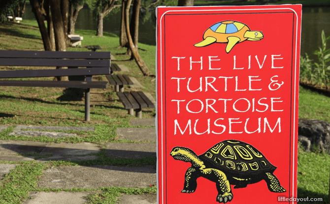 The Live Turtle & Tortoise Museum