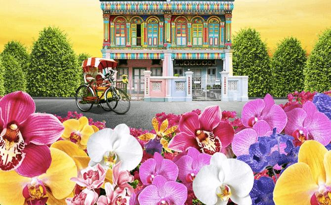 Orchid Extravaganza Floral Display