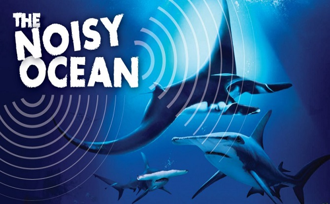 [Video] S.E.A. Aquarium Ocean Fest 2019 - The Noisy Ocean