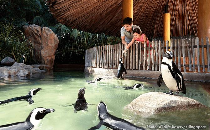 Jurong Bird Park penguin feeding